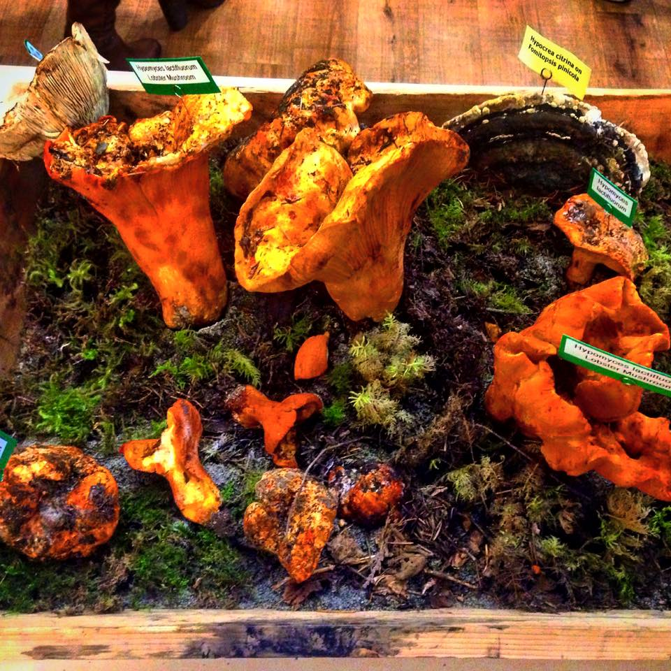 Heartwood Provisions Restaurant Seattle | Wild Mushroom Show - Lobster Mushrooms