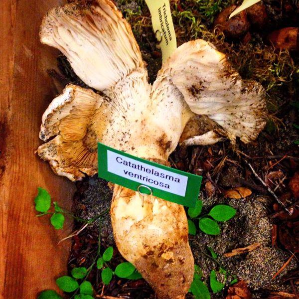 Heartwood Provisions Seattle Restaurant | Wild Mushroom Show - False Matasutake