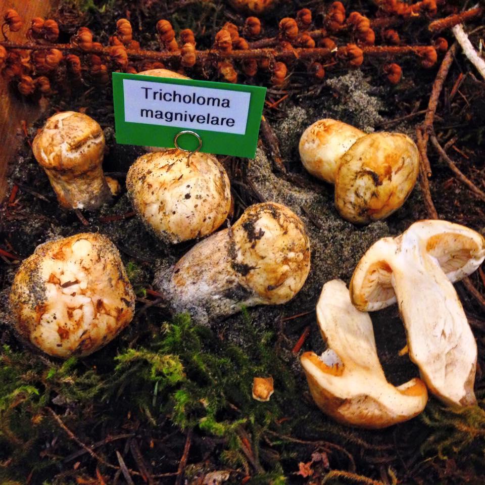 Heartwood Provisions Restaurant Seattle | Wild Mushroom Show - Hedgehog Mushroom