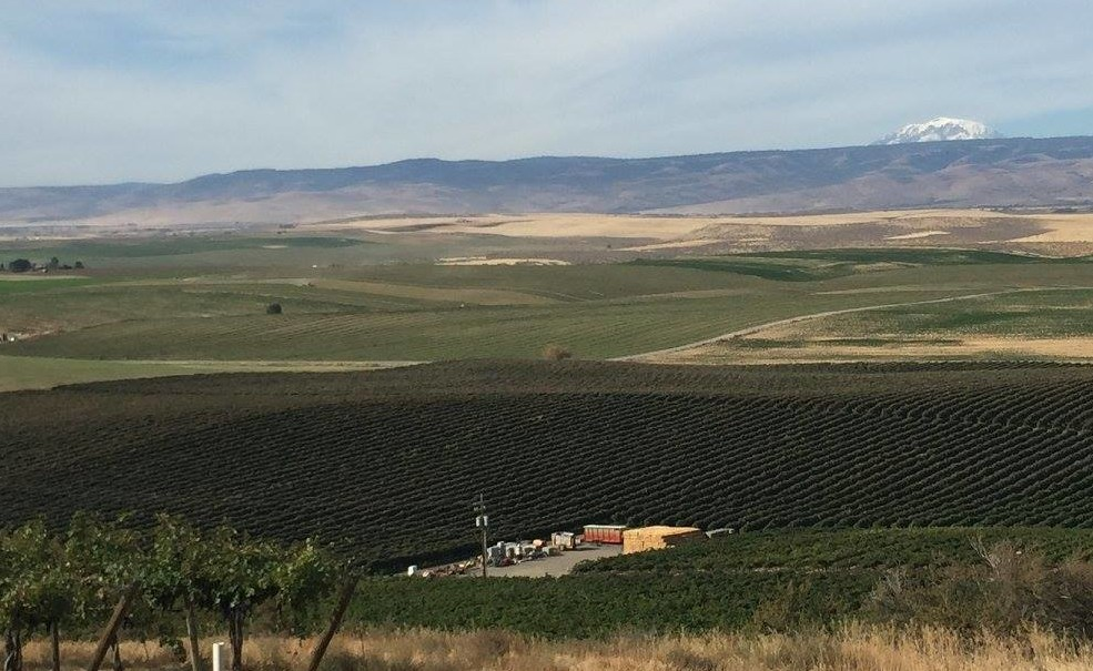 Falling for Washington Wines   Exploring Locally Wineries with Beverage Director Amanda Reed