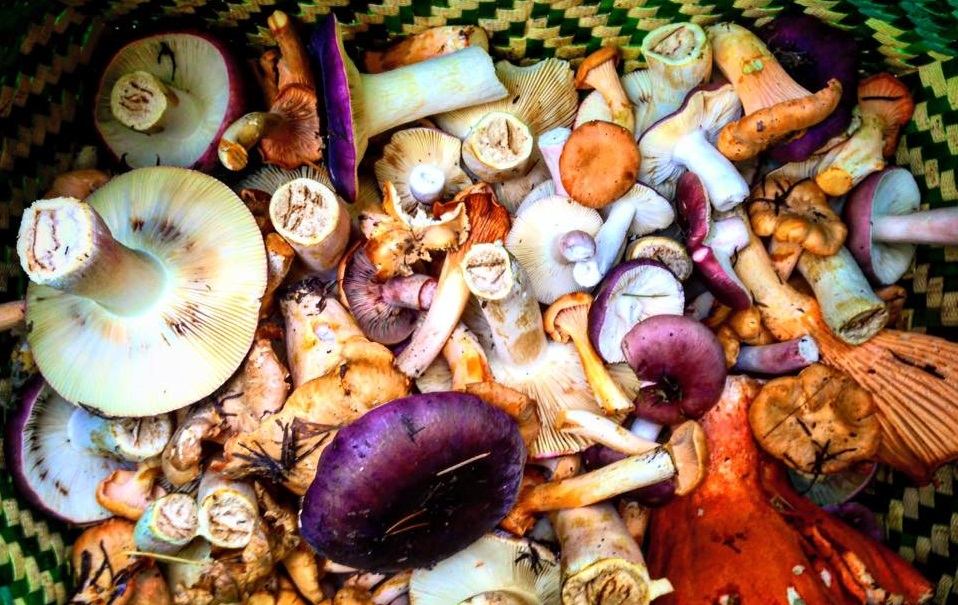Wild for Mushrooms | Foraging for Wild Edibles with Chef Varin
