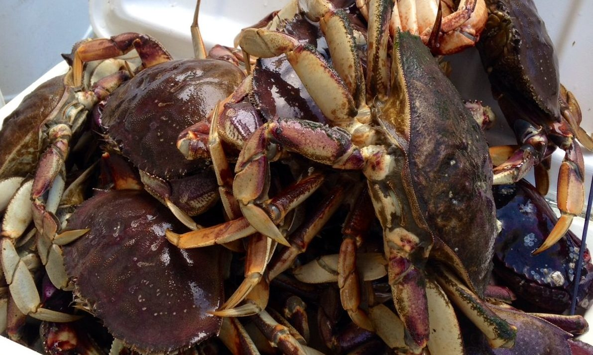 Provisions for Crabbing