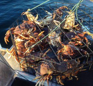 Crabbing pot