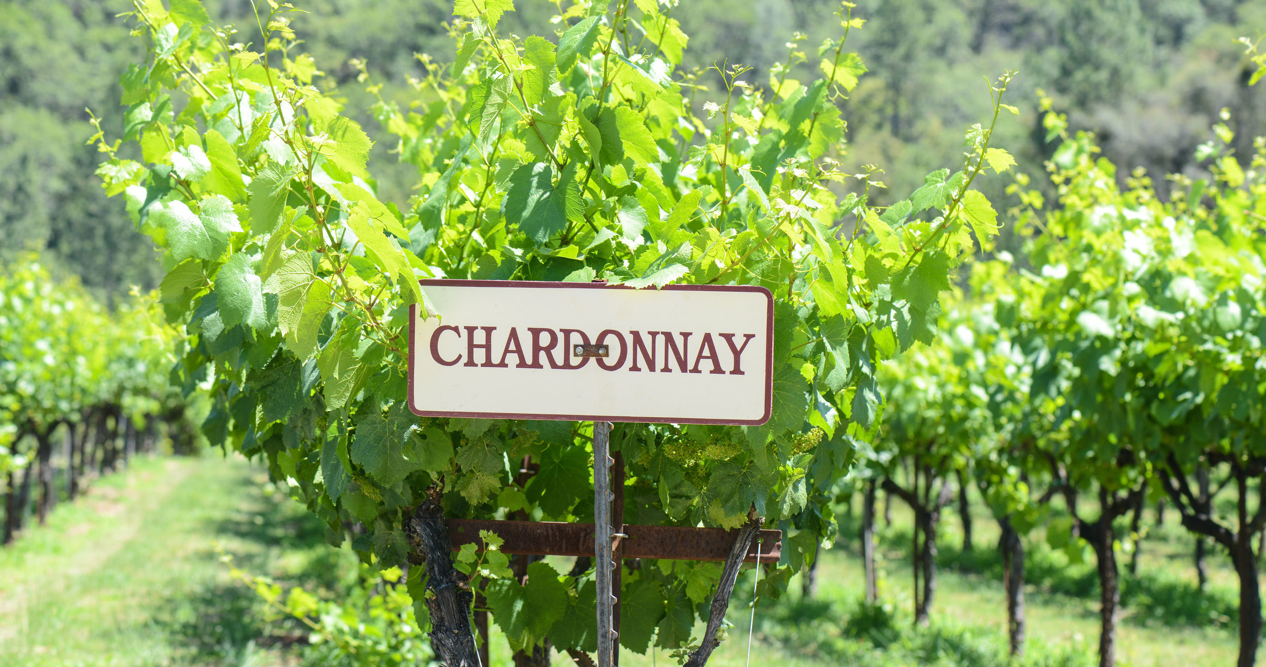 5 Laudable Chardonnay's, and Why We Love Them